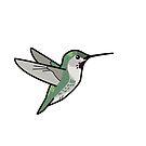 Anna's Hummingbird (female) by KeesKiwi