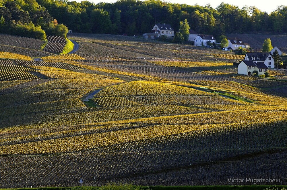 Cuis vineyard sunset. by Victor Pugatschew