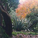 Autumn in Mount Wilson, NSW, Australia by C J Lewis