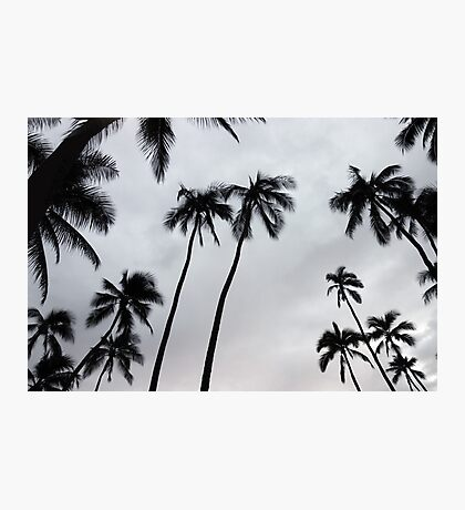 Black and White Palms III Photographic Print