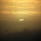 Foggy Sunrise  by Bob Hortman
