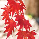 Autumn Garland by Philippe Sainte-Laudy
