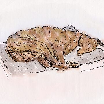 Study of a sleeping greyhound by AndreGascoigne