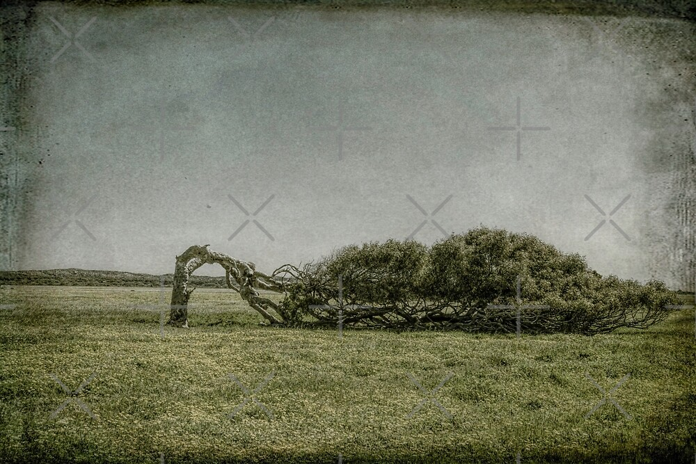 The Leaning Tree, Greenough, Western Australia #2 by Elaine Teague