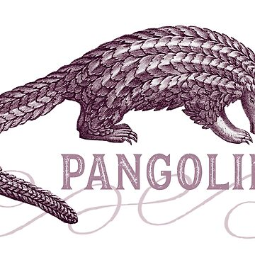 Pangolin Scaly Anteater by AntiqueImages