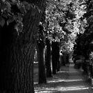 Fall Walk by Ellinor Advincula