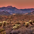 Sunset Across the Desert by Sue  Cullumber