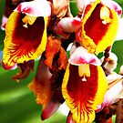 Flower in Bloom II by CDNPhoto