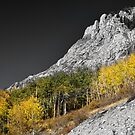 Waning Gibbous Moon Autumn Monarch Pass BWSC by Bo Insogna