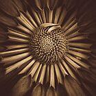 I love a nutella chrysanthemum. by alan shapiro