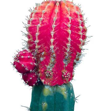 My Cactus Friend by Manitarka