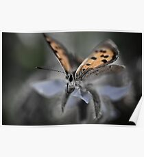 abstract butterfly Poster