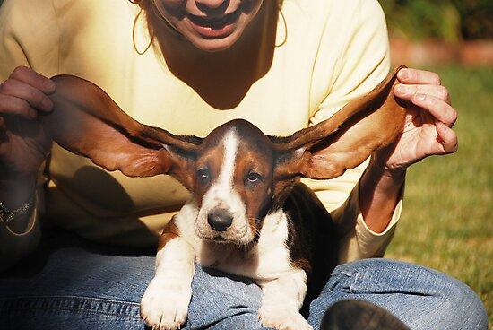 The Flying Nun-Puppy by Kent Burton
