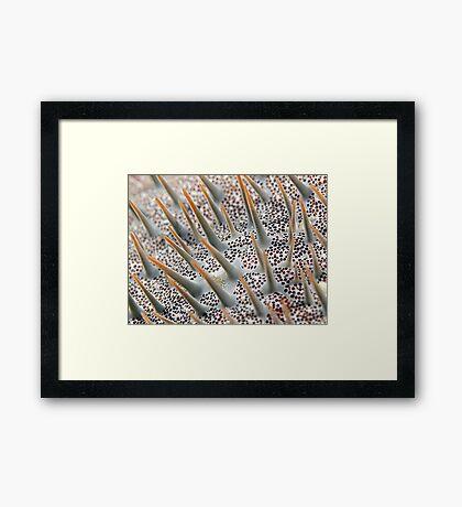 Reef Art - Crown of Thorns Framed Print