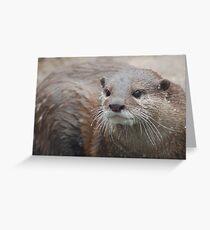 Cute Wiskers Greeting Card