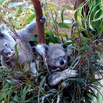 Cute koalas by missmoneypenny