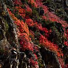 Palisade Autumn, Idaho by Suraj Mathew