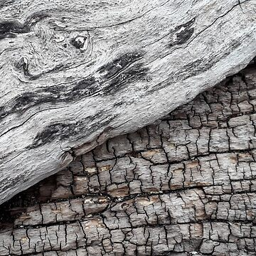 Old Wood - Photography by Fluid Nature by vmajzlik
