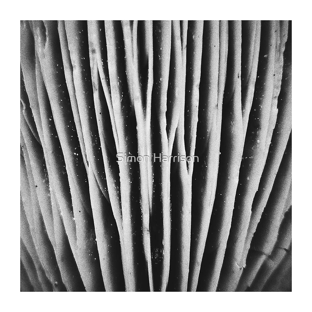 Mushroom abstract  by Simon Harrison