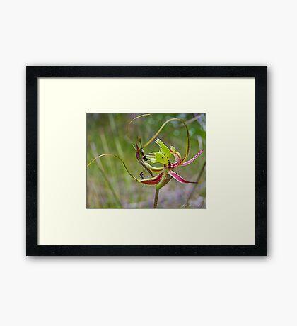 Forrest Mantis Orchid Framed Print