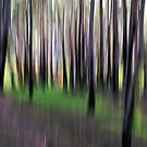 Black Forest by Kitsmumma