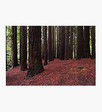 Silent Giants Photographic Print