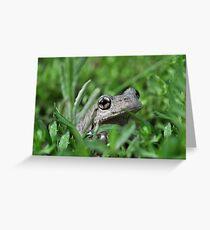 Perons Tree Frog, Litoria peronni. Greeting Card