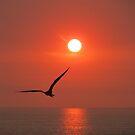The bird and the sun - El Pájaro Y El Sol by Bernhard Matejka