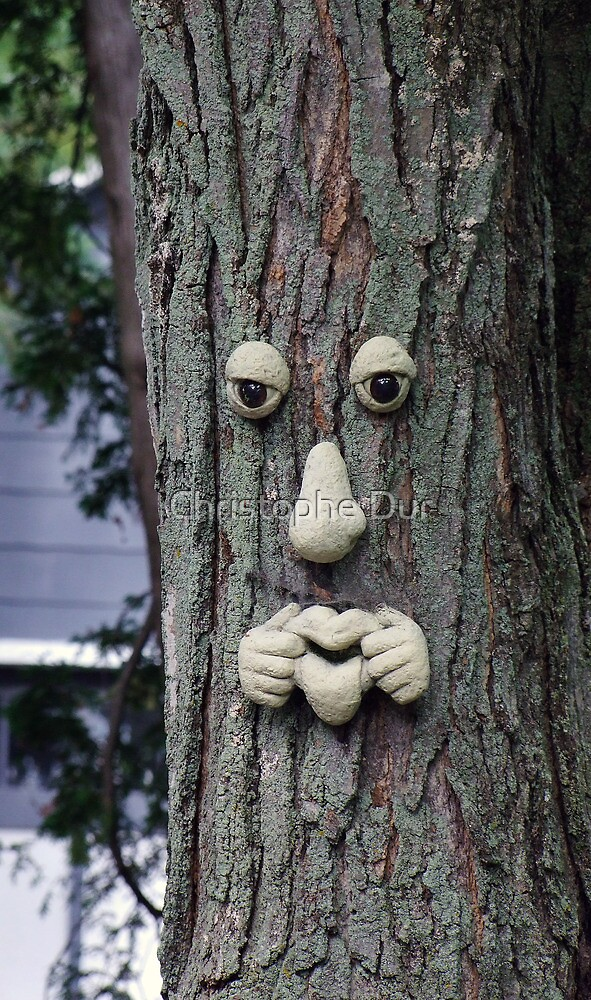 The real  face of tree by Christophe Dur