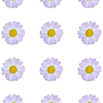 Pale Lilac Daisy by STHogan