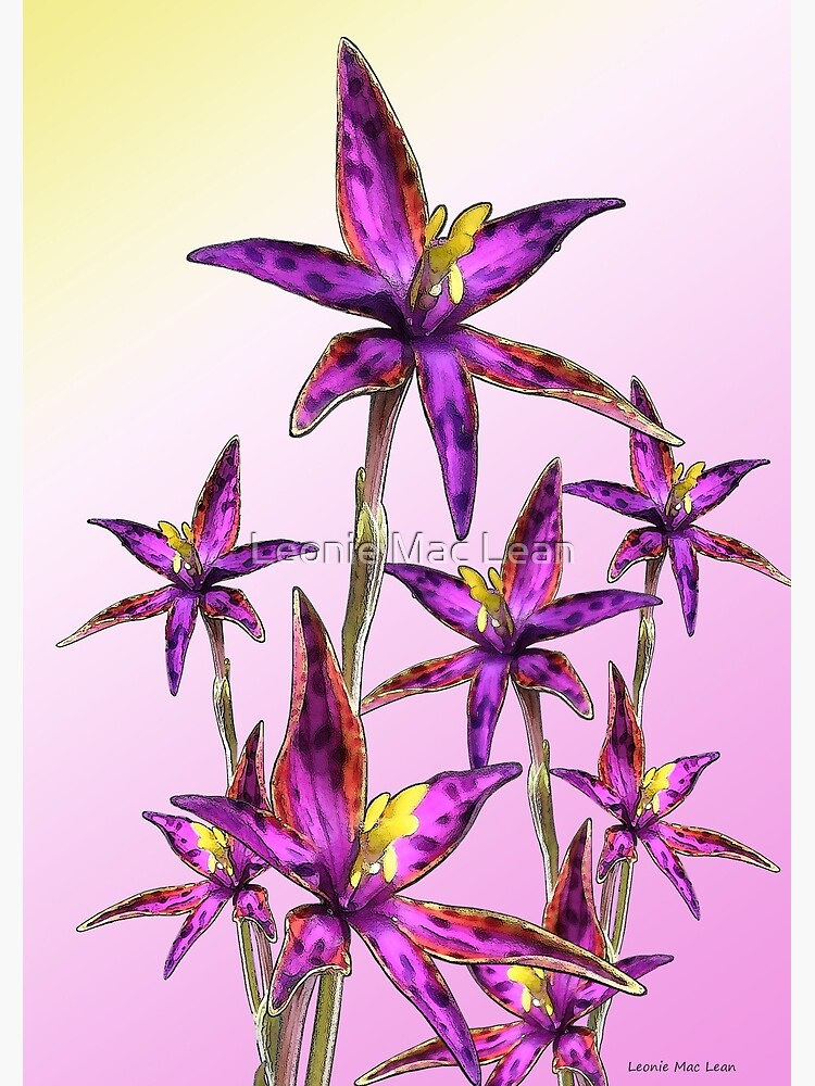 Eastern Queen of Sheba Orchids by yallmia