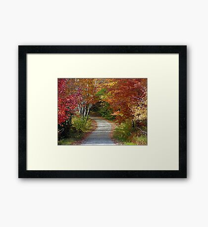New Hampshire Foliage 2008 #8 Framed Print
