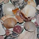 Shells II by tmcrews