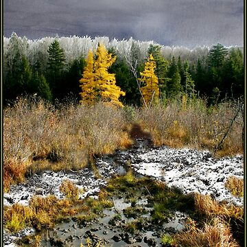Baker River Valley Poster/Card by waynedking