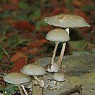 Porcelain Fungus by Robert Abraham