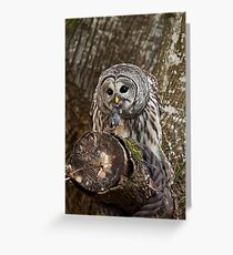 OWL & PREY Greeting Card