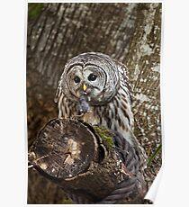 OWL & PREY Poster