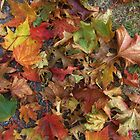 Autumn Leaves by lezvee
