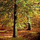 Autumn Series - One by Ann Garrett