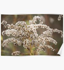 Autumn Dried Goldenrod Poster