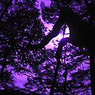 Purple Crush by Karen Hansen