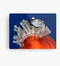 False Nemo Metal Print