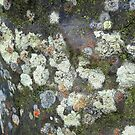 Moss And Lichen - Border Stone Scottish Border by mcworldent