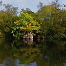 Reflection - Tree On Water by mcworldent