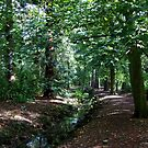 Elvaston Castle Woodland by mcworldent