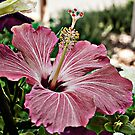 Hibiscus Dark Pink  by tinymystic