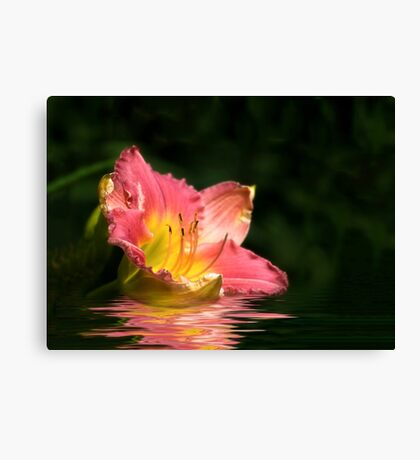 Lily In Water Canvas Print