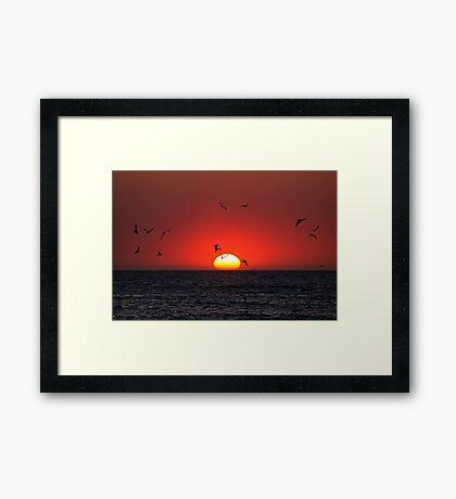 Sunset & Birds Framed Print