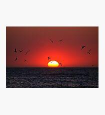 Sunset & Birds Photographic Print