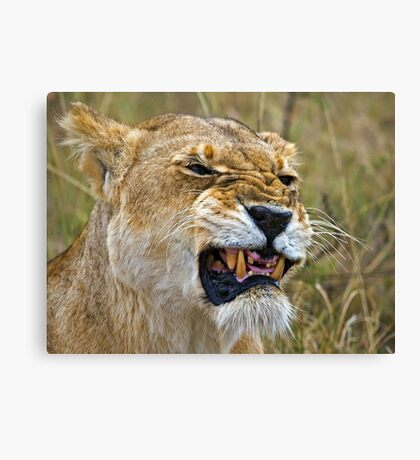 Lion's Mimic Canvas Print